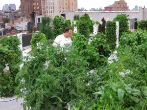tower gardening